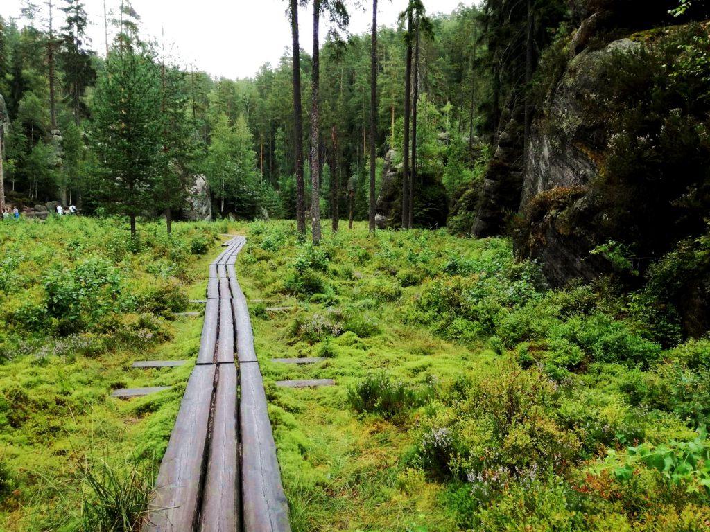 Skalne miasto w Teplicach-kładki dla turystów nawet przez leśną polanę