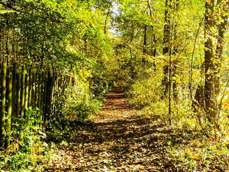 ścieżka do rezerwatu cisów