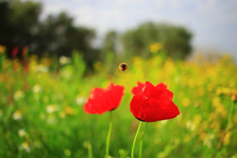 bajka dwa kwiaty na parapecie